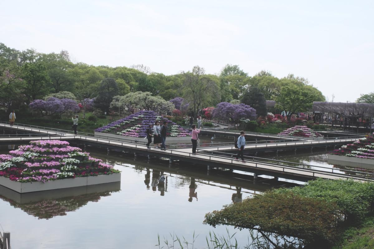 DSCF2875 wisteria ashikaga park