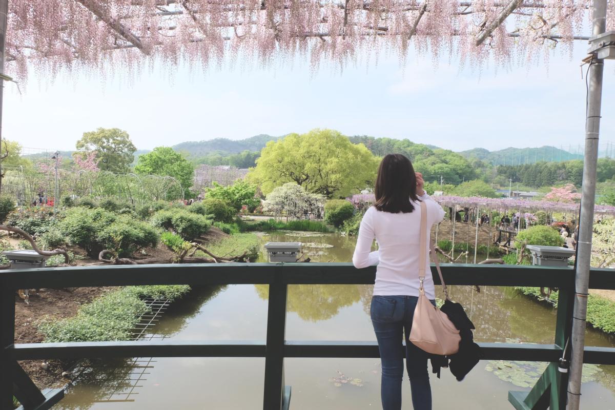 DSCF2887 wisteria ashikaga park