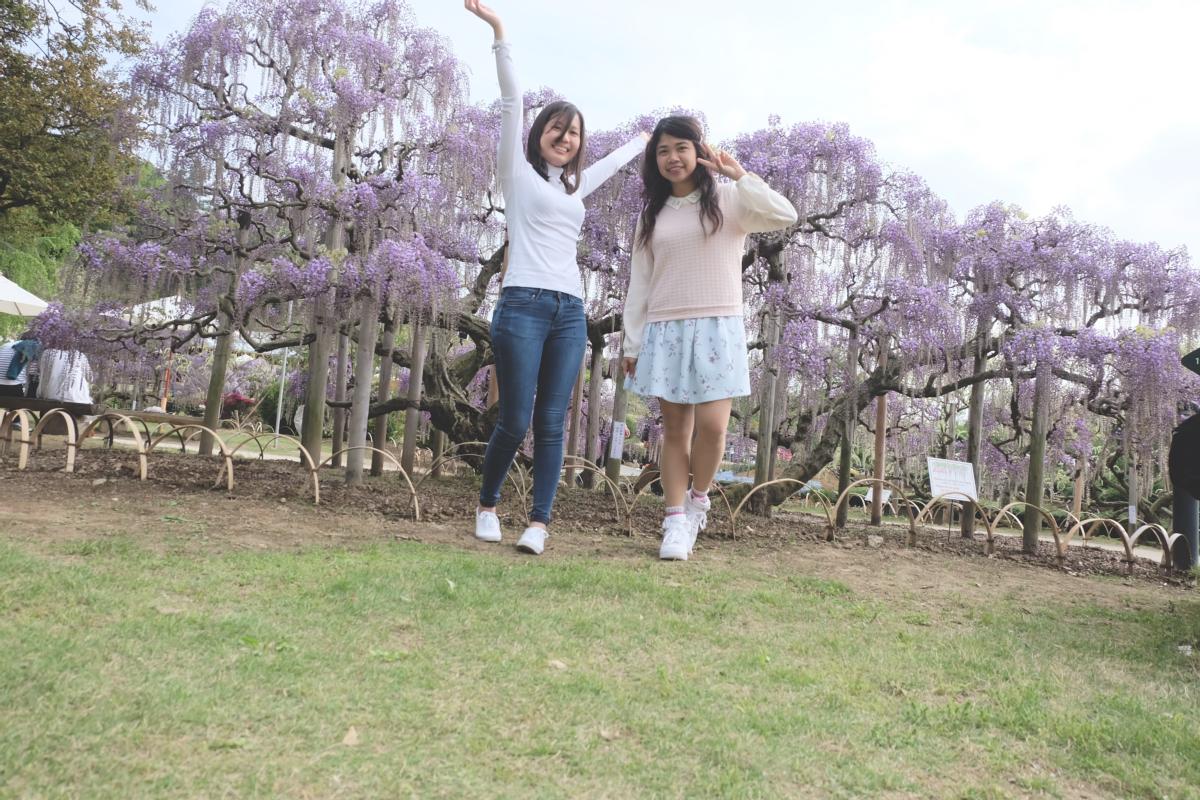 DSCF2902 wisteria ashikaga park