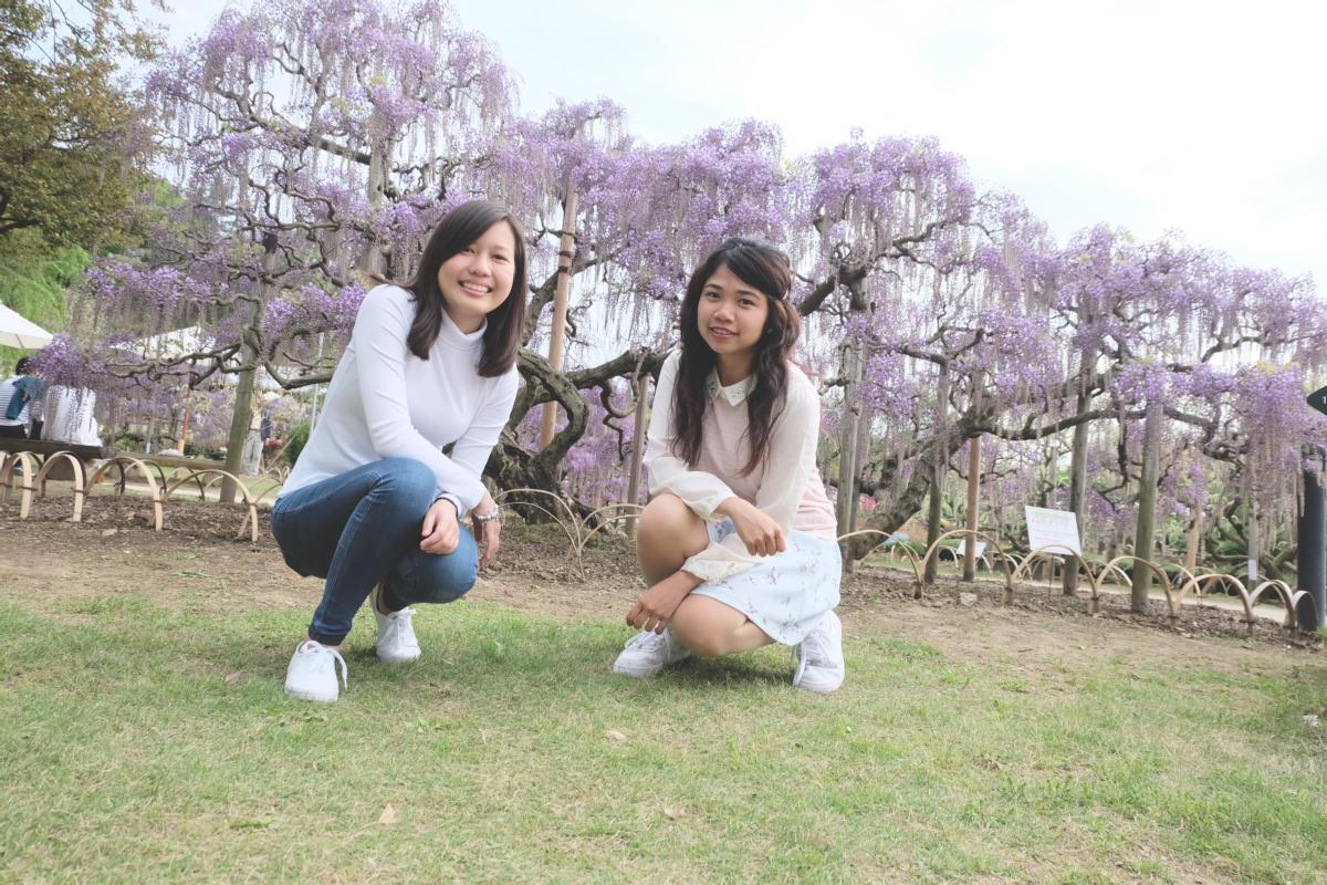 DSCF2903 wisteria ashikaga park