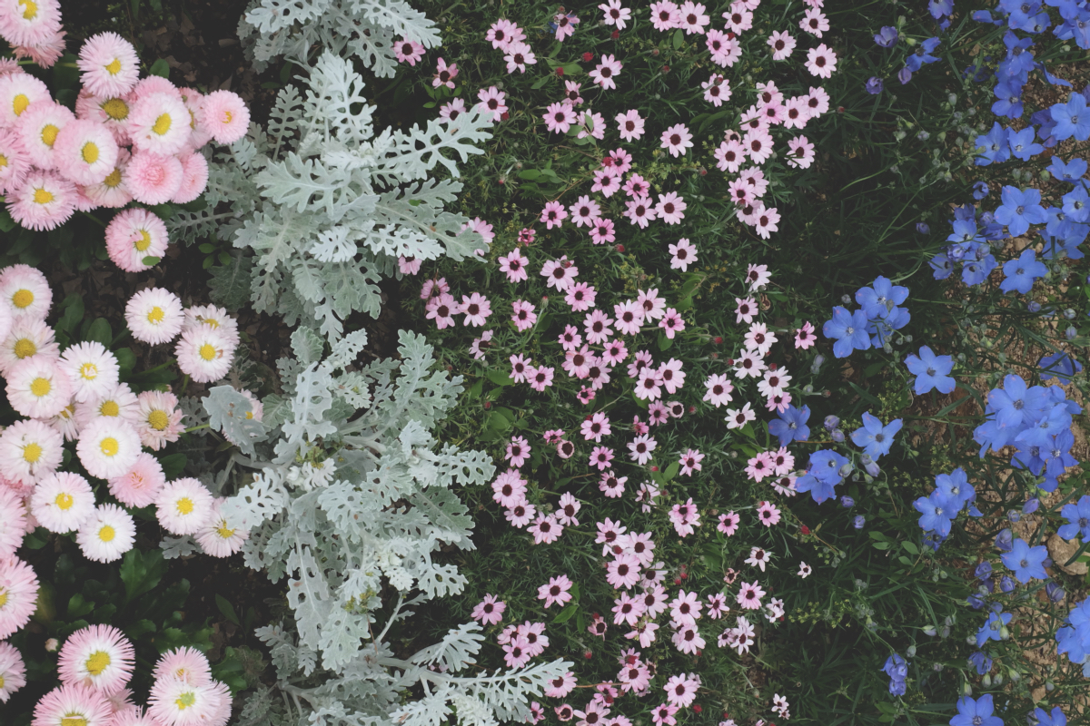 DSCF2910 wisteria ashikaga park