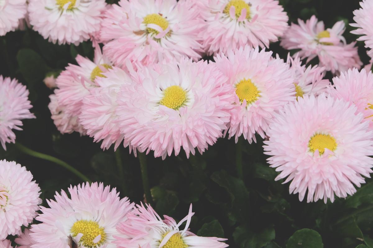 DSCF2911 wisteria ashikaga park