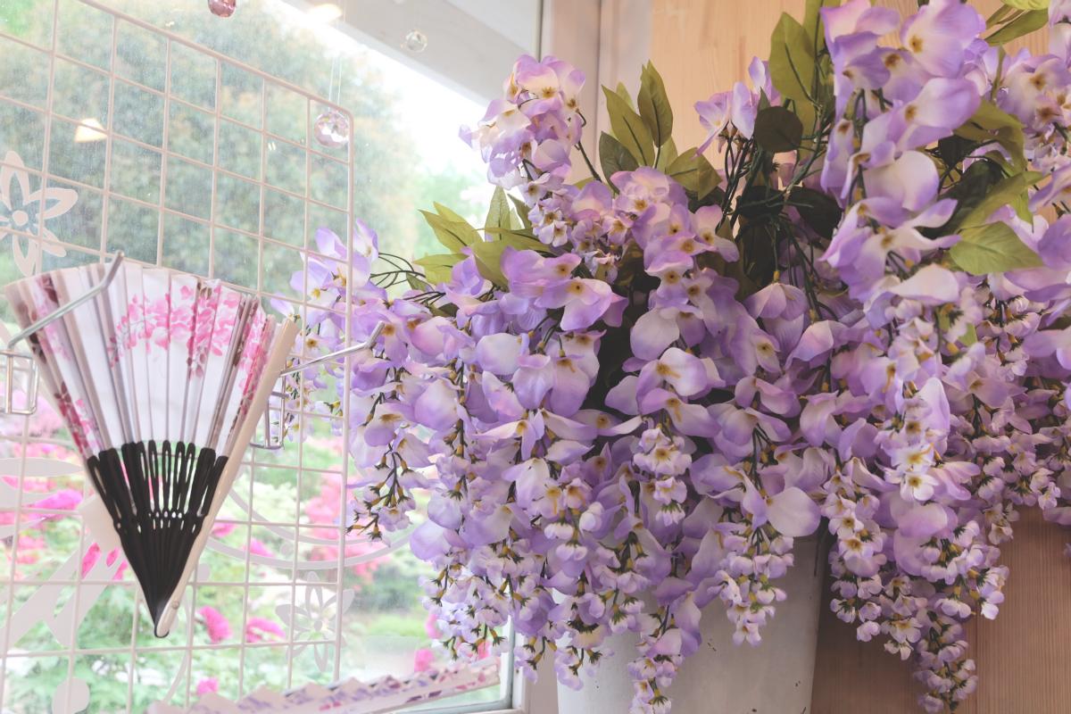 DSCF2952 wisteria ashikaga park