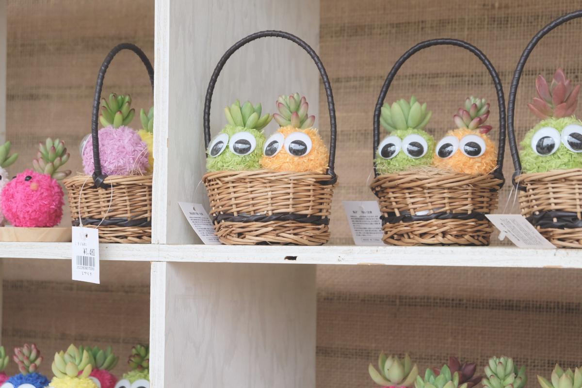 DSCF2959 wisteria ashikaga park