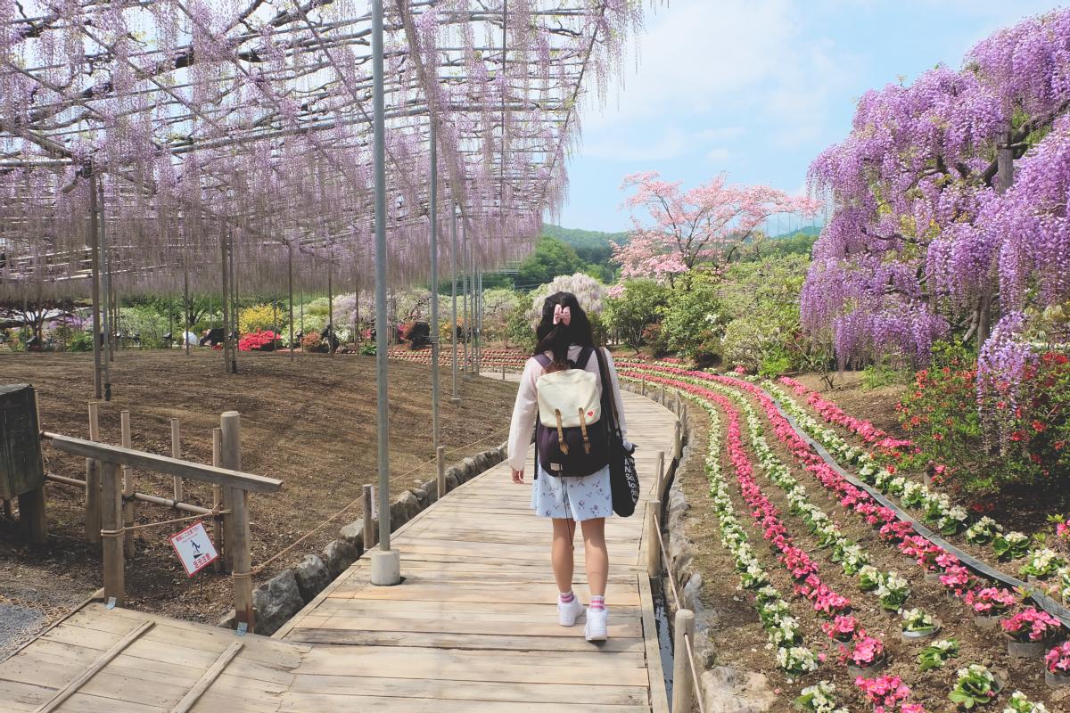 DSCF3967 wisteria ashikaga flower park tochigi