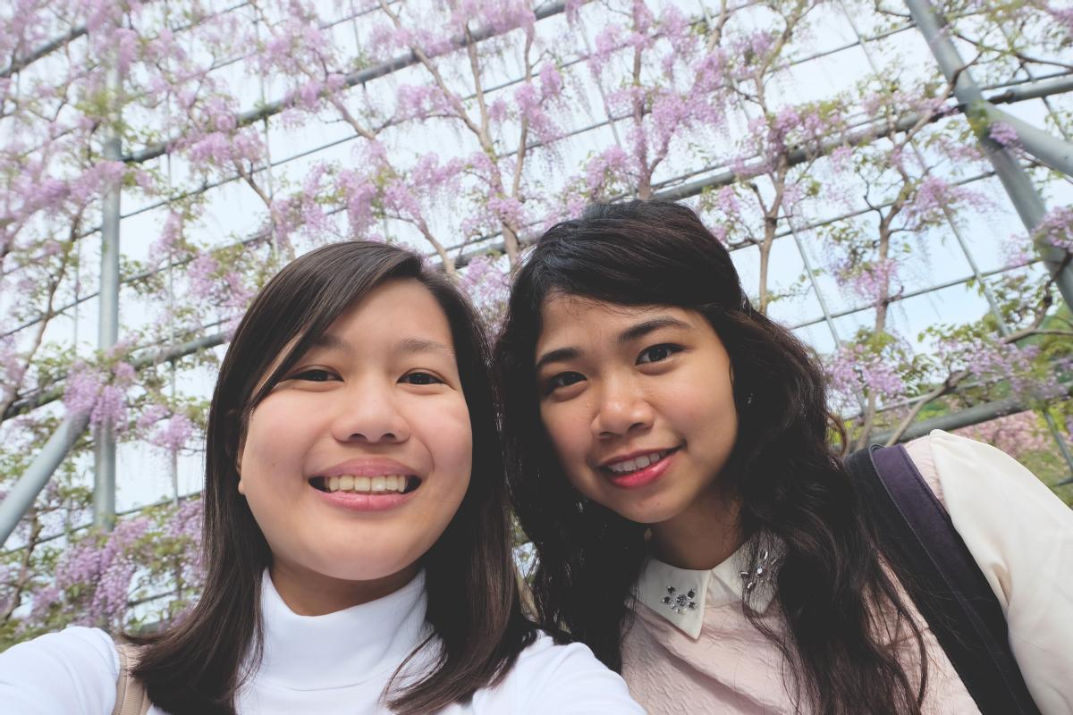 DSCF4031 wisteria ashikaga flower park tochigi