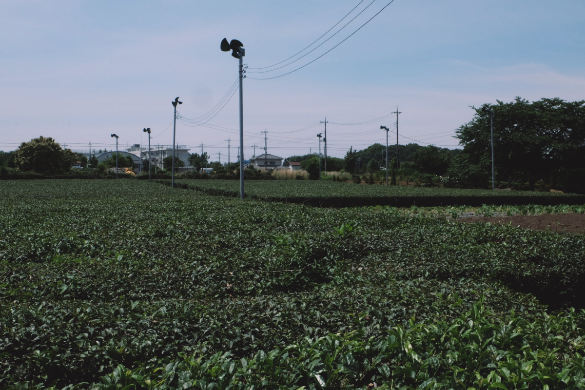 DSCF6993 totoro forest saitama