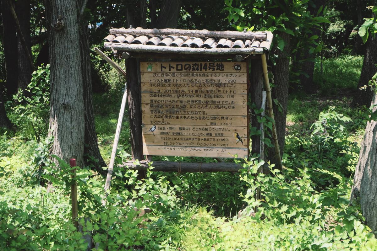 DSCF6994 totoro forest saitama