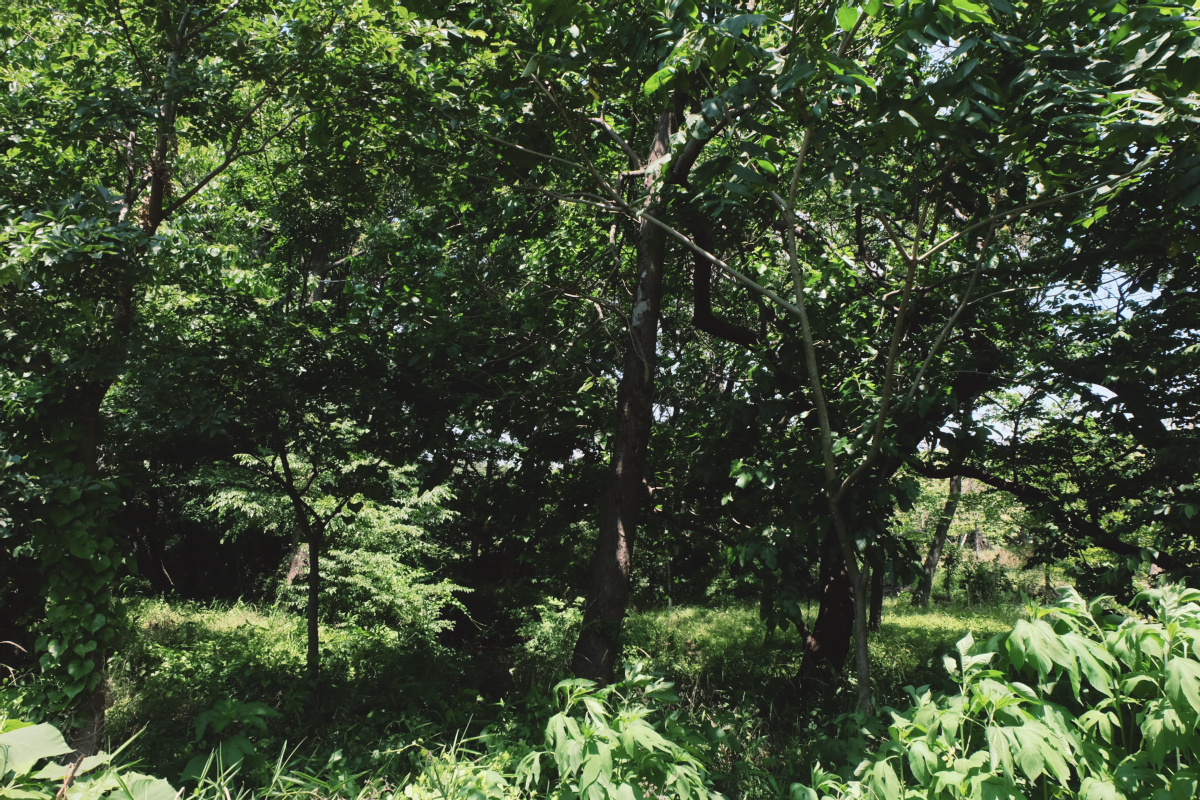 DSCF6997 totoro forest saitama