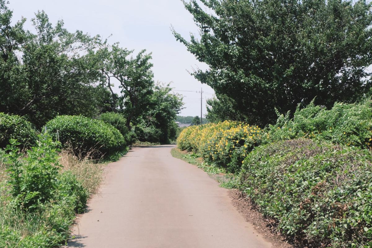 DSCF7001 totoro forest saitama