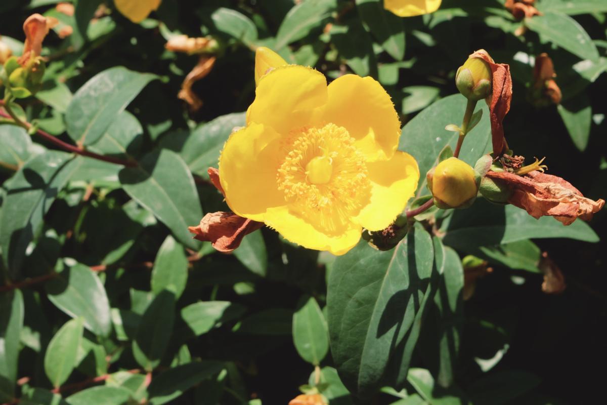 DSCF7004 totoro forest saitama