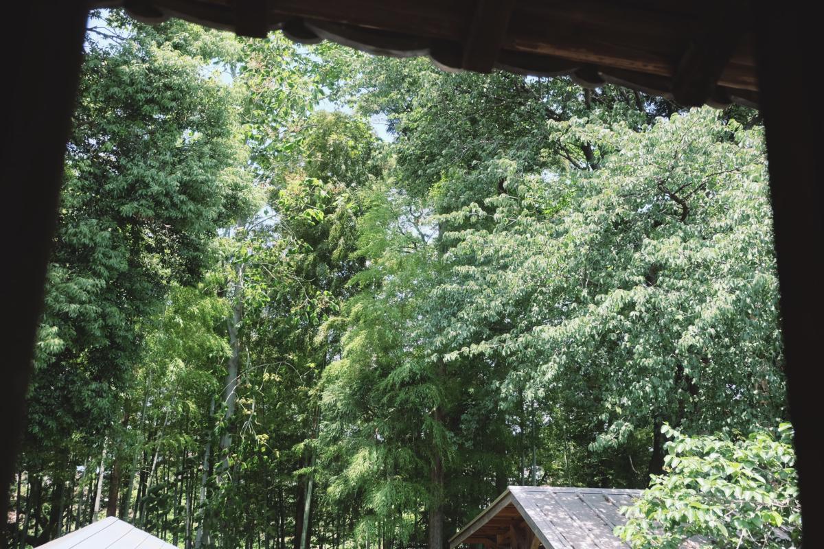 DSCF7113 totoro forest saitama