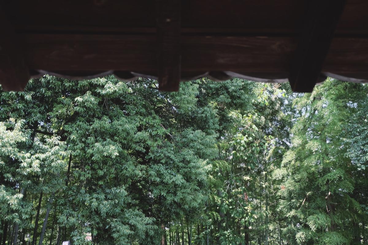 DSCF7116 totoro forest saitama