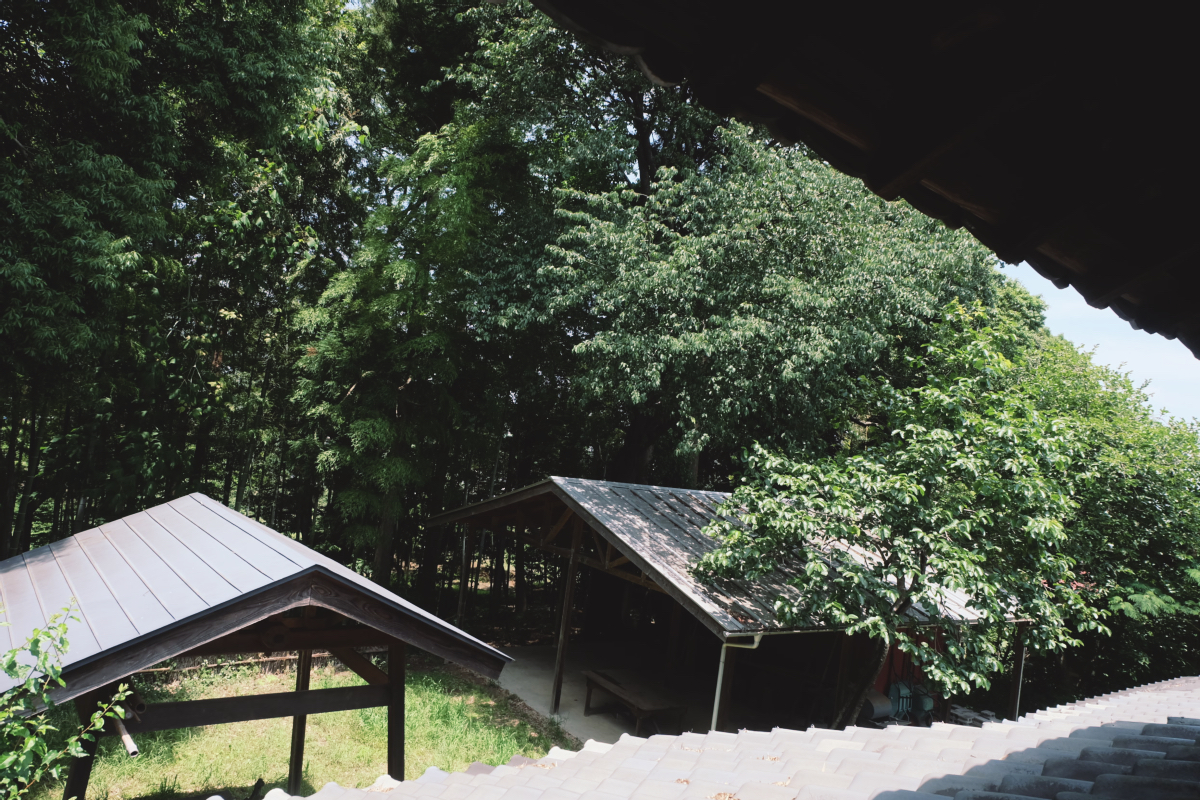 DSCF7117 totoro forest saitama