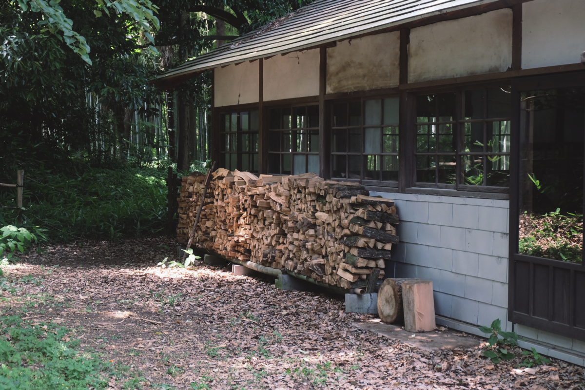 DSCF7138 totoro forest saitama