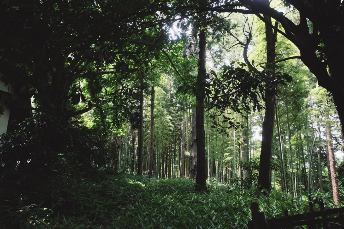 DSCF7141 totoro forest saitama