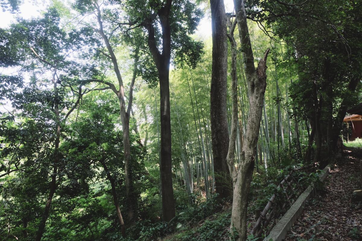 DSCF7142 totoro forest saitama