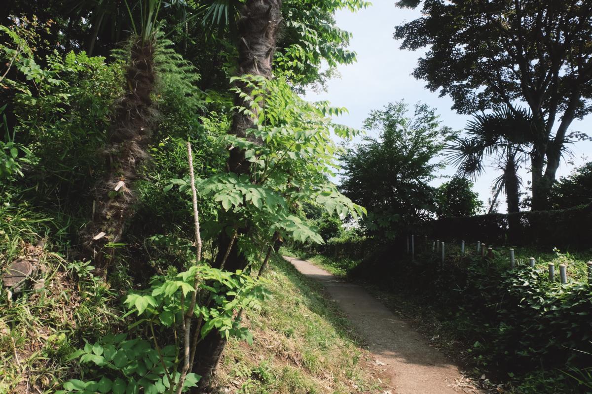 DSCF7192 totoro forest saitama