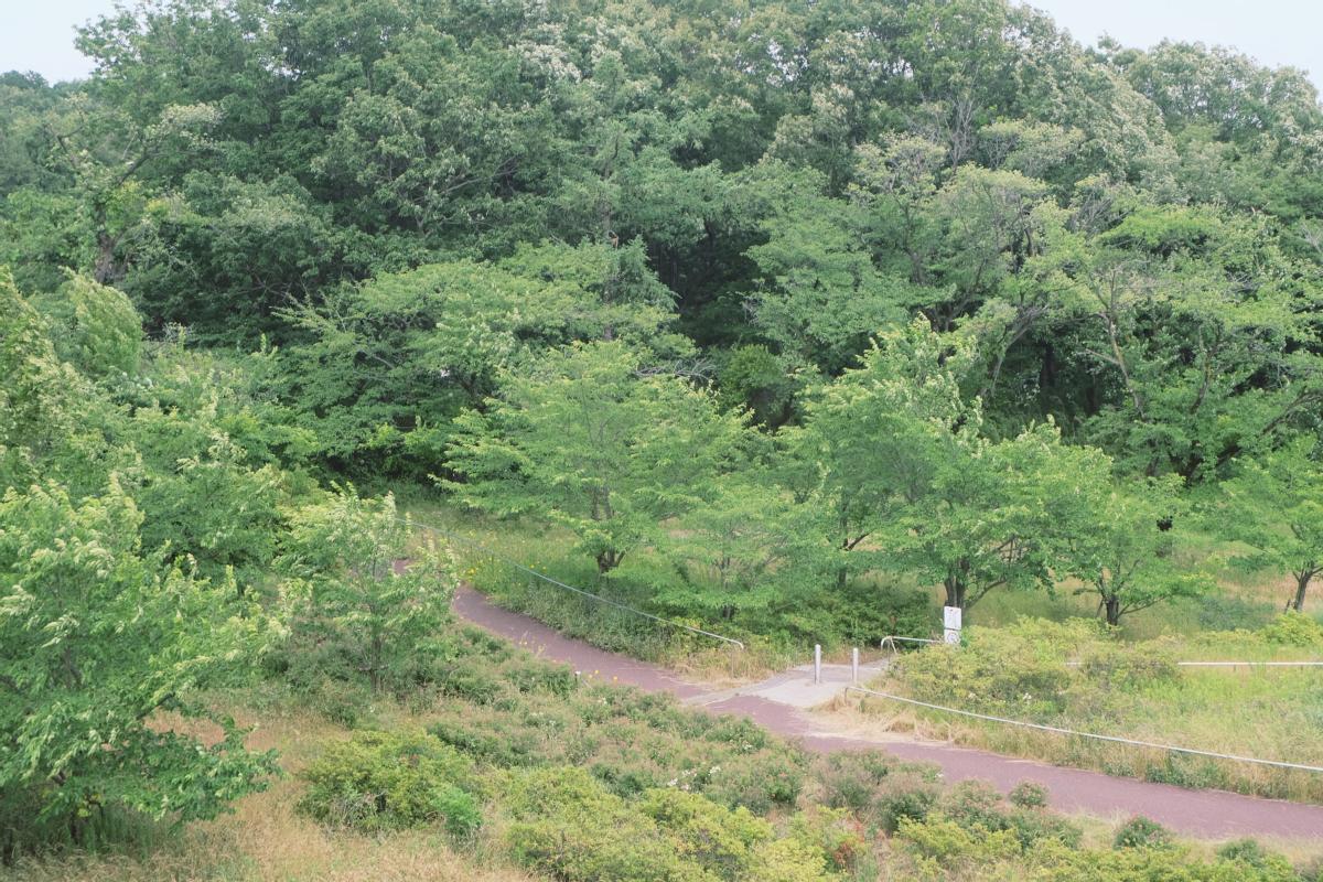 DSCF7199 totoro forest saitama
