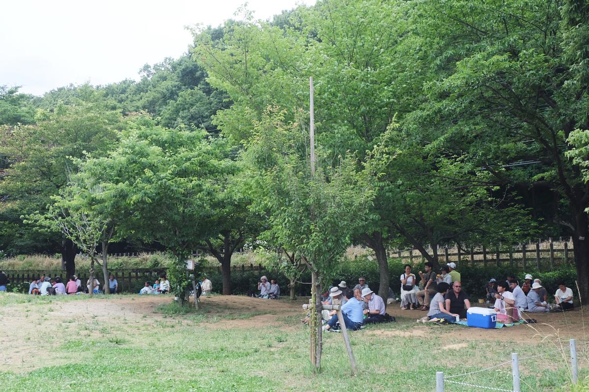 DSCF7256 Iris Festival Higashimurayama
