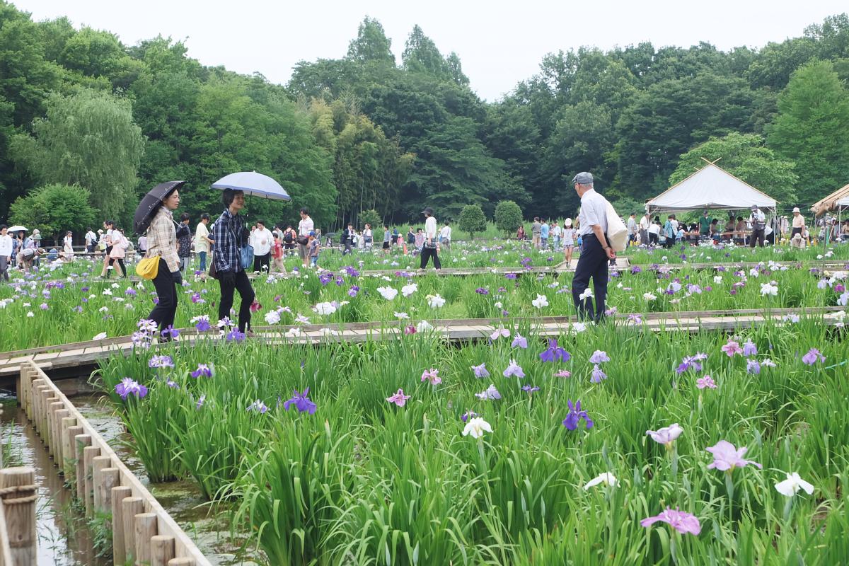 DSCF7274 Iris Festival Higashimurayama