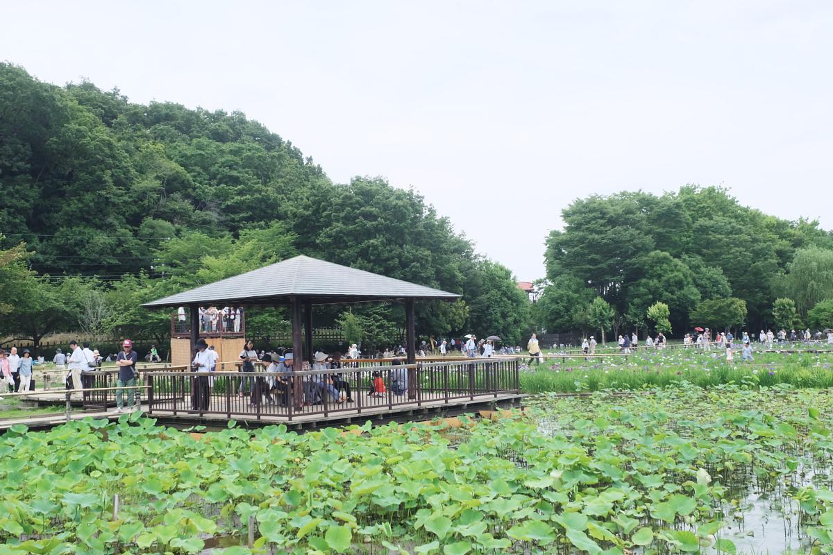 DSCF7277 Iris Festival Higashimurayama