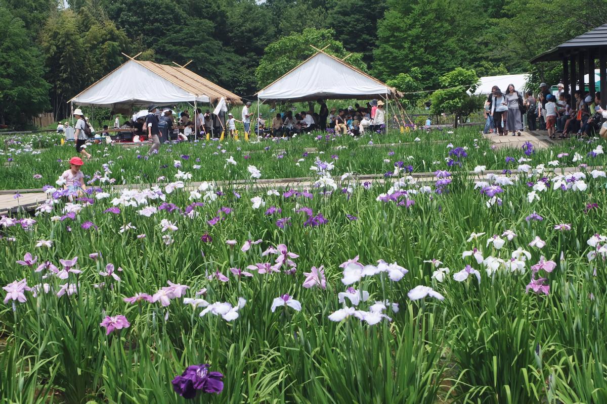 DSCF7322 Iris Festival Higashimurayama