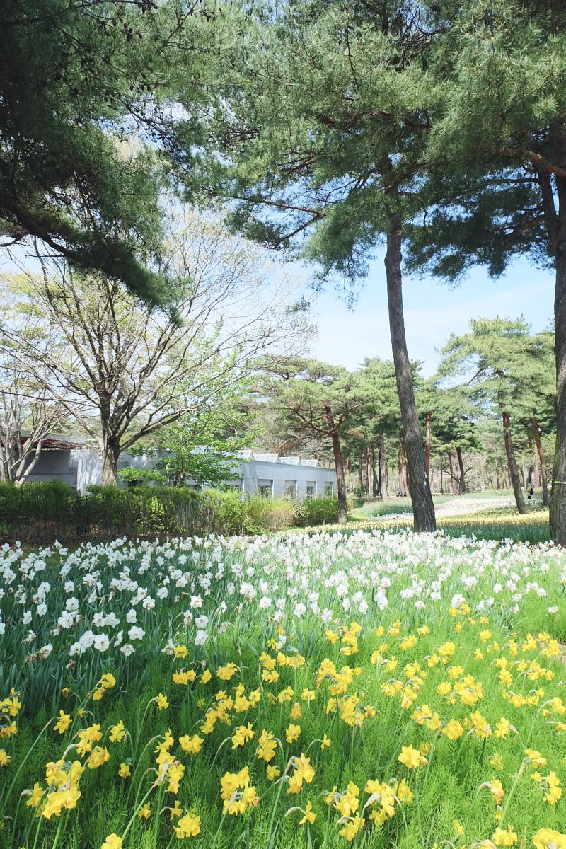 Nemophila Hitachi Seaside Park Rainbowholic Japan Kawaii 12