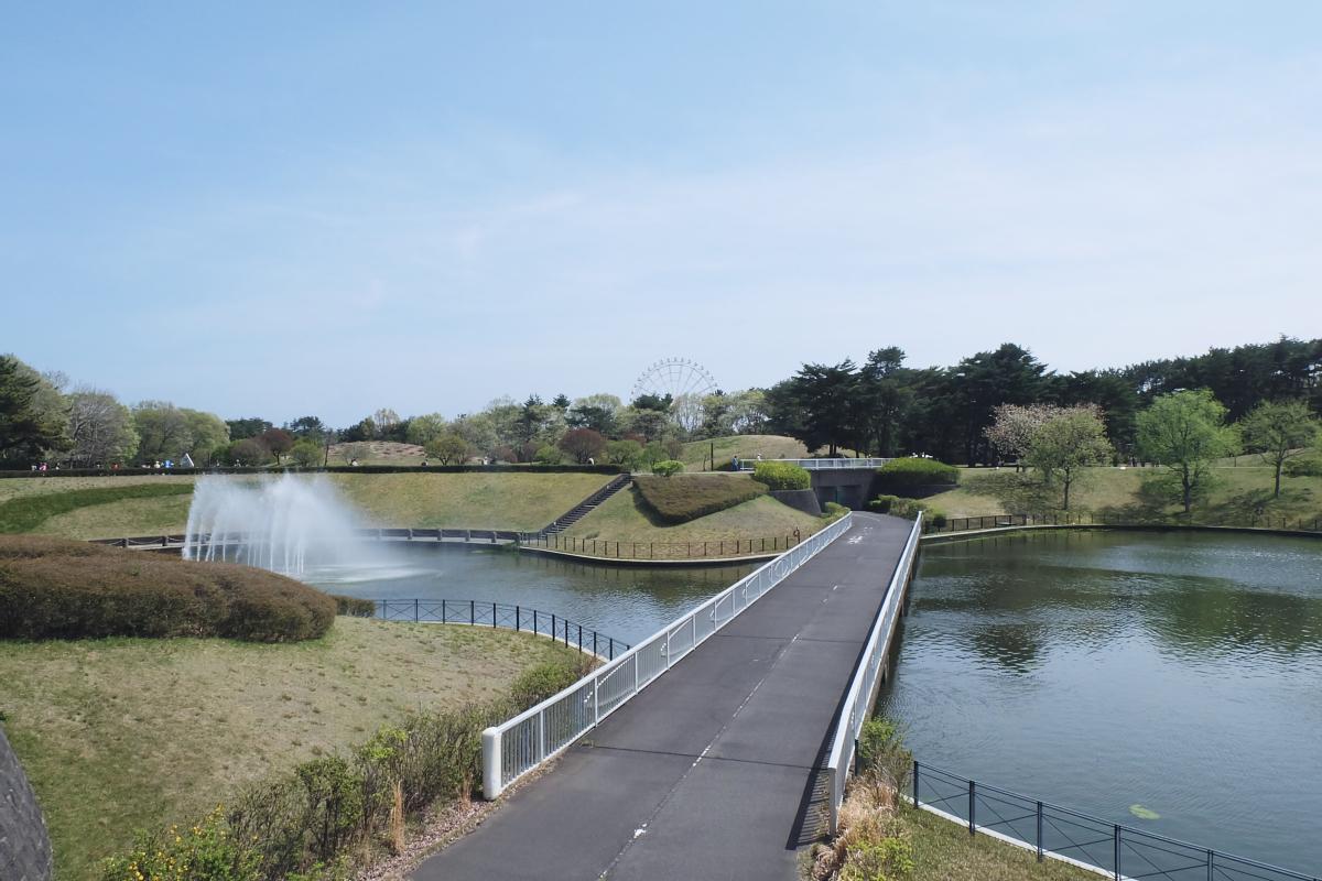 Nemophila Hitachi Seaside Park Rainbowholic Japan Kawaii 16