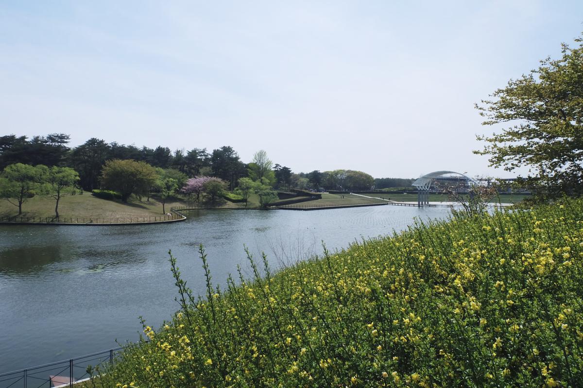 Nemophila Hitachi Seaside Park Rainbowholic Japan Kawaii 17