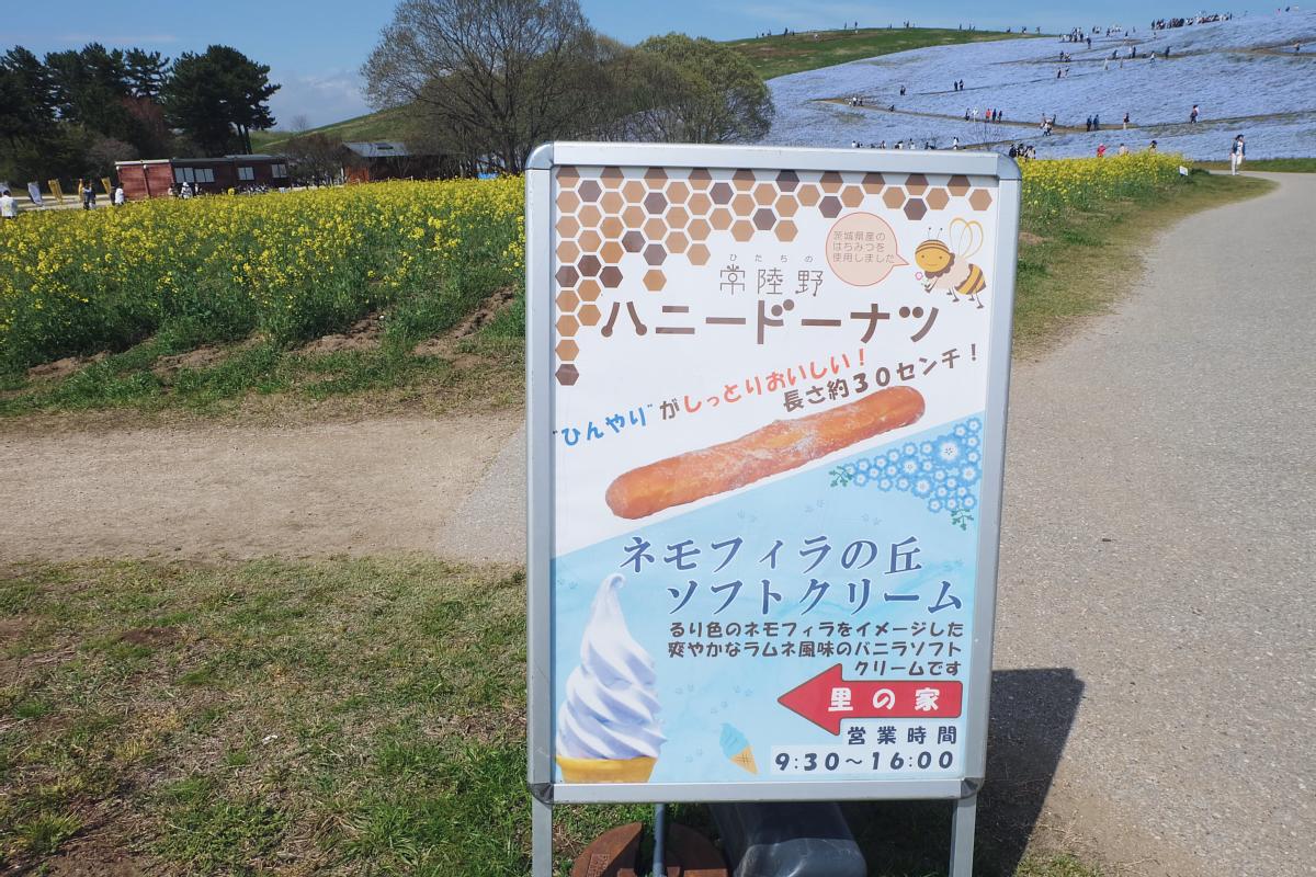 Nemophila Hitachi Seaside Park Rainbowholic Japan Kawaii 30