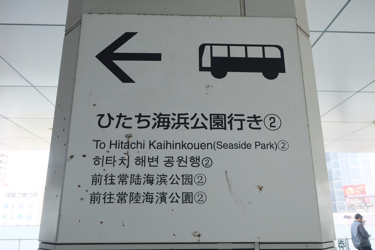 Nemophila Hitachi Seaside Park Rainbowholic Japan Kawaii 4