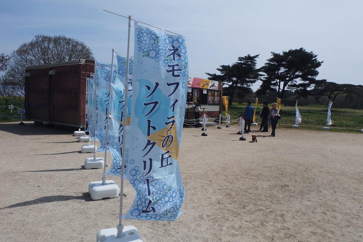 Nemophila Hitachi Seaside Park Rainbowholic Japan Kawaii 40