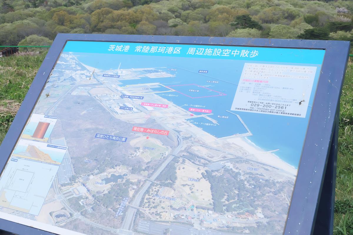 Nemophila Hitachi Seaside Park Rainbowholic Japan Kawaii 64