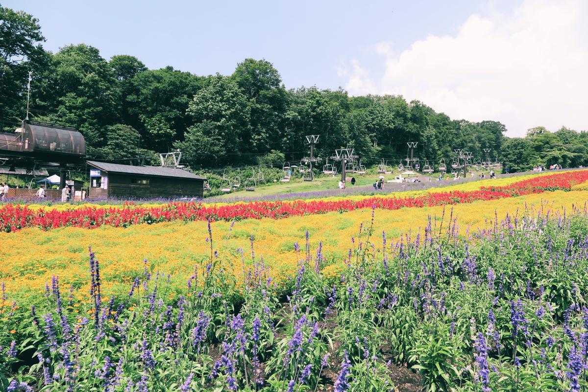 IMG_0832Tambara Lavender Park 2