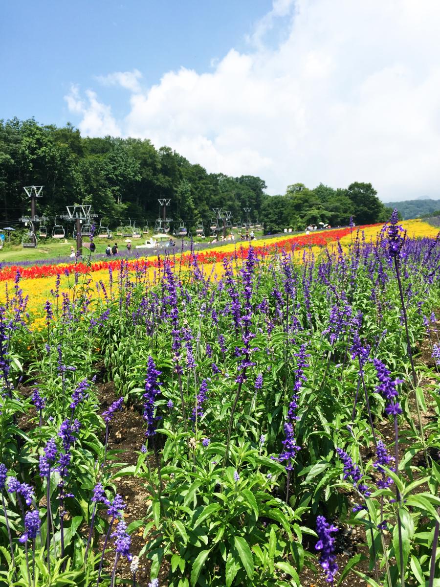 IMG_7377 Tambara Lavender Park Kawaii