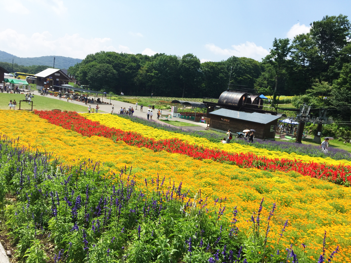 IMG_7378 Tambara Lavender Park Kawaii