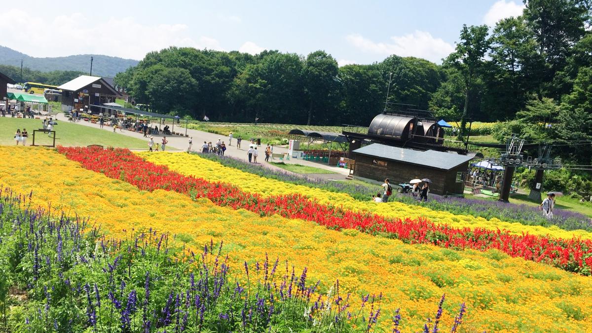 IMG_7382 Tambara Lavender Park Kawaii