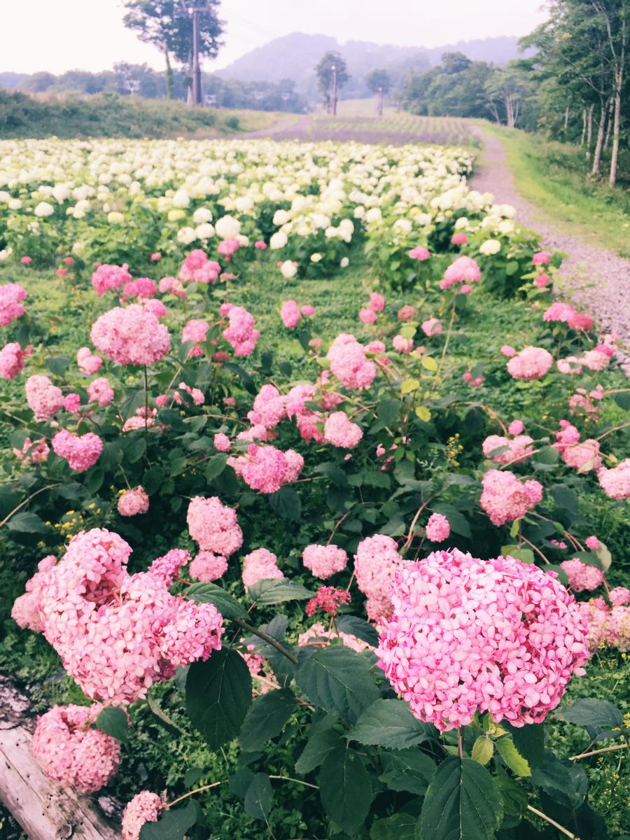 IMG_7446 Tambara Lavender Park Kawaii