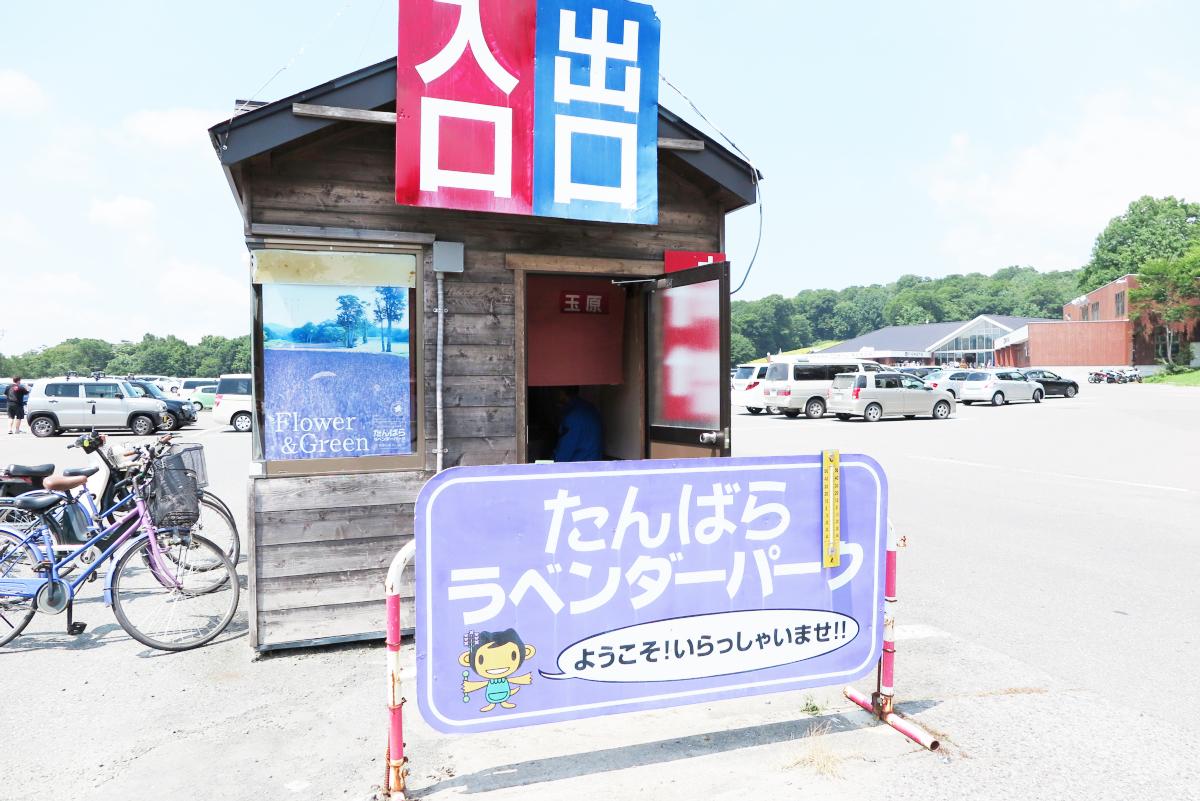 Kawaii Lavender Tambara Park 11