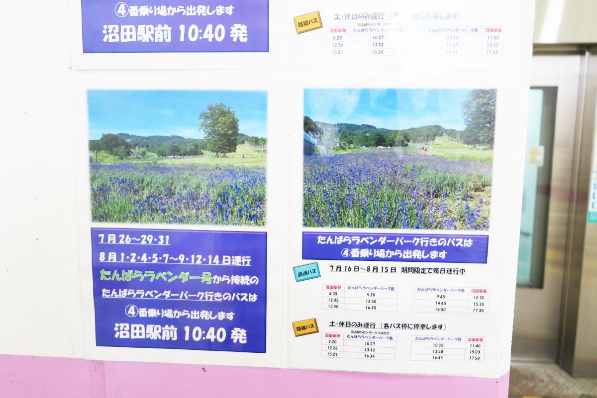 Kawaii Lavender Tambara Park 3