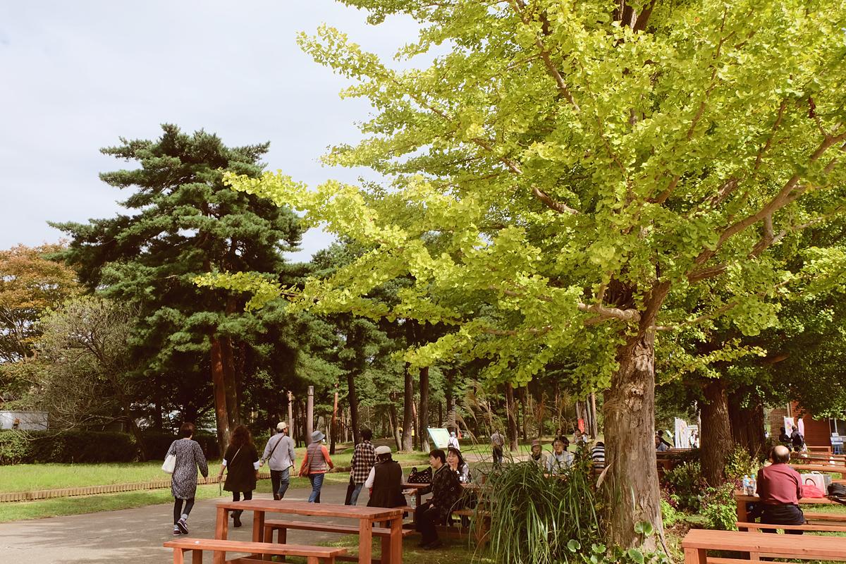 kochia-hitachi-seaside-park-autumn-japan-travel-ibaraki-13