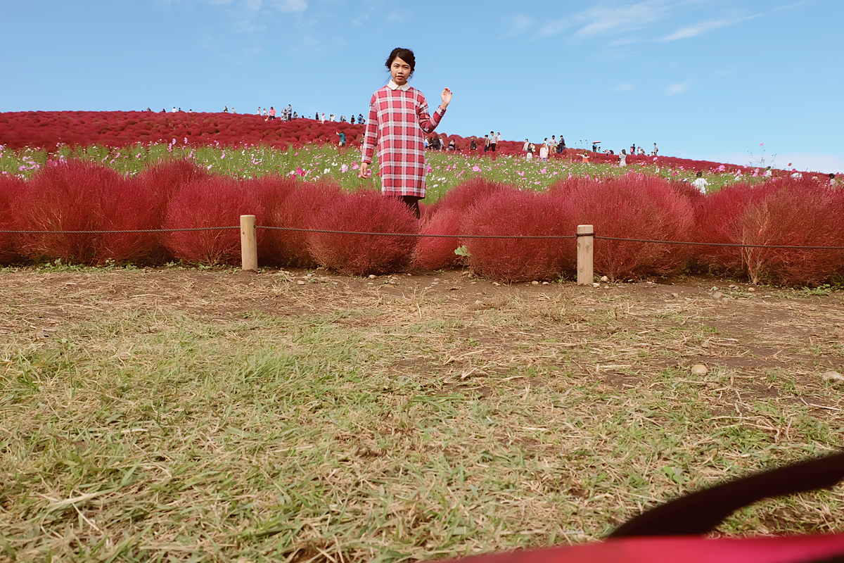 kochia-hitachi-seaside-park-autumn-japan-travel-ibaraki-55