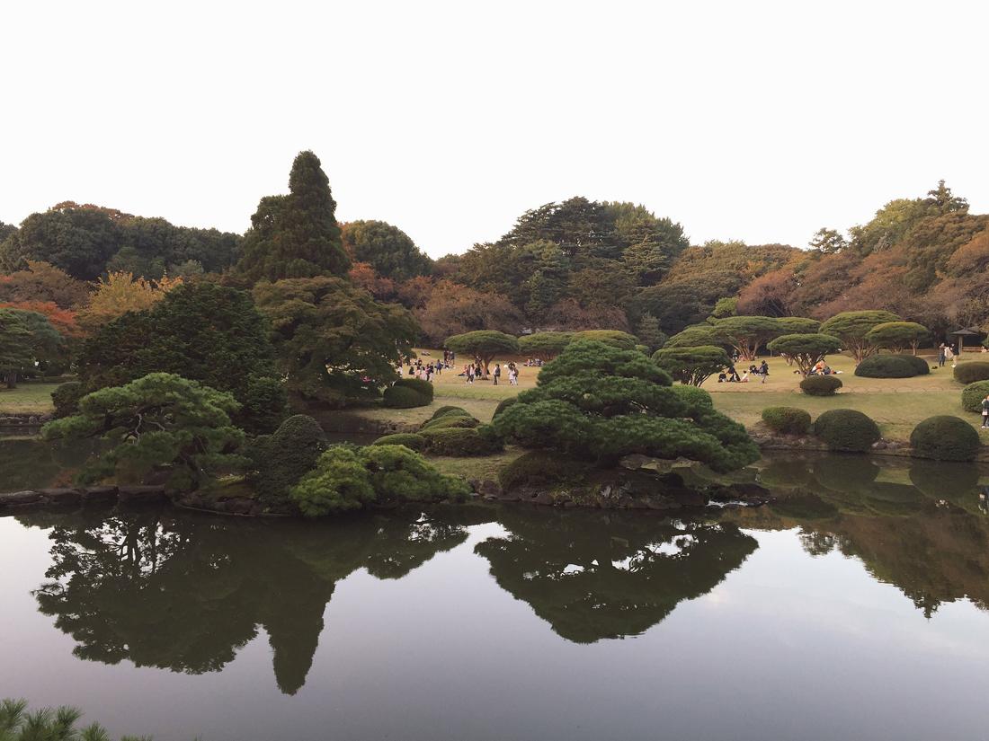 koyo-autumn-shinjuku-6
