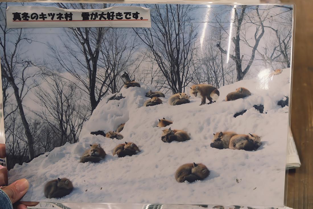 miyagi-zao-fox-village-rainbowholic-110