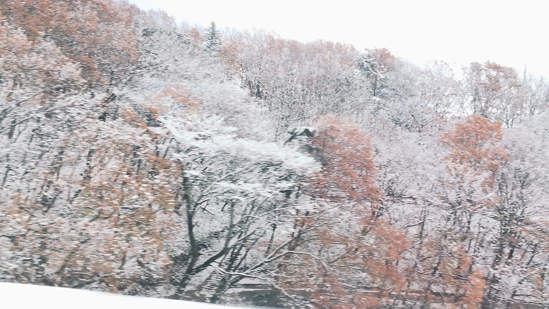miyagi-zao-fox-village-rainbowholic-143