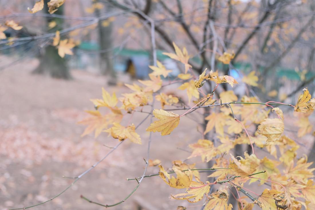 miyagi-zao-fox-village-rainbowholic-24