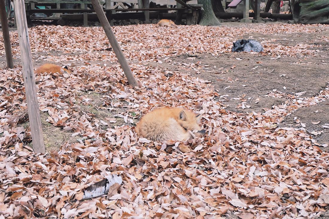 miyagi-zao-fox-village-rainbowholic-28