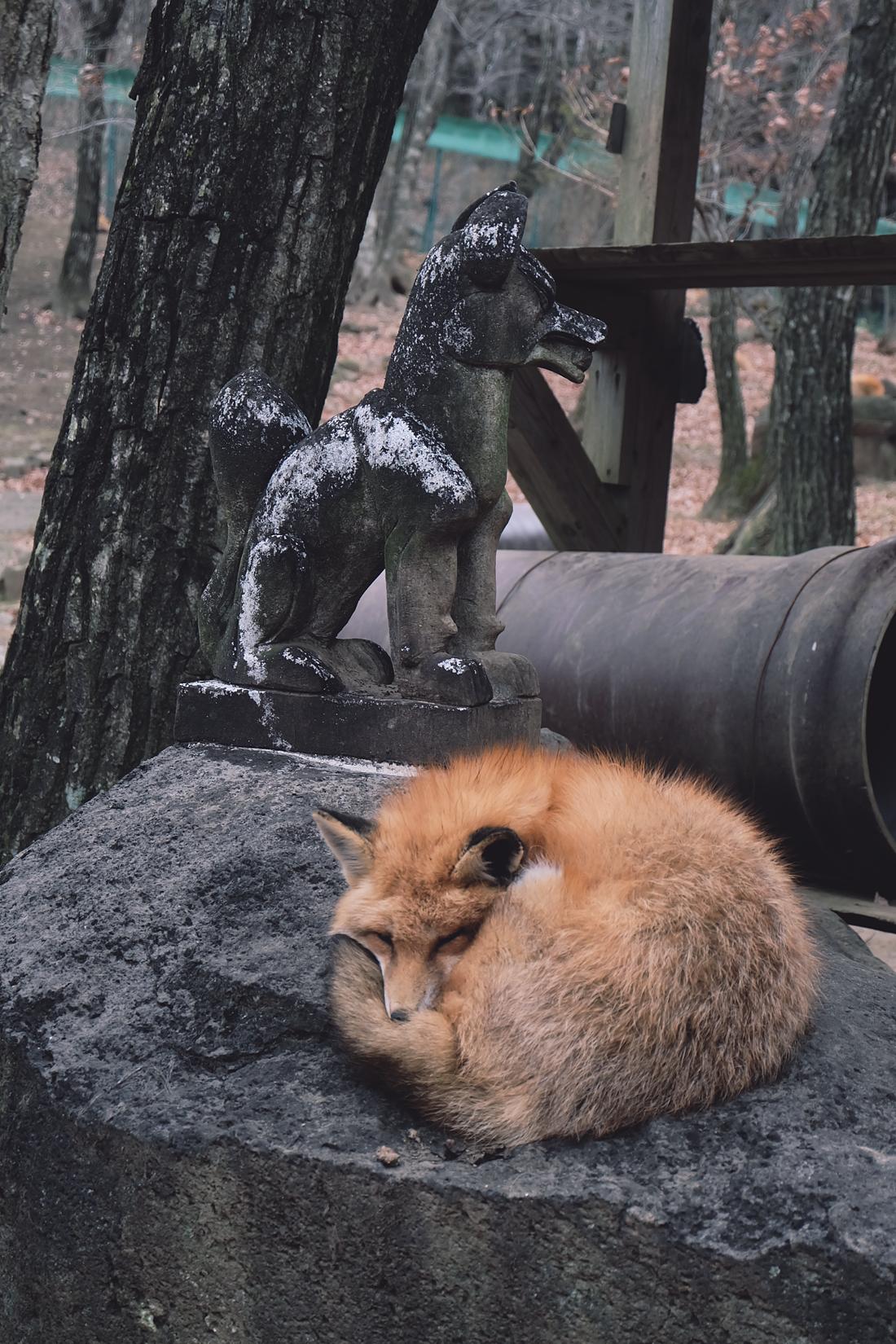 miyagi-zao-fox-village-rainbowholic-48