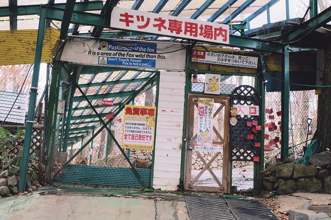 miyagi-zao-fox-village-rainbowholic-6
